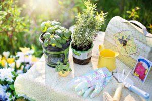 Planten tuin